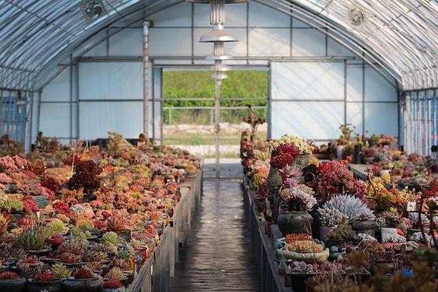 Szklarnia ogrodowa: czy warto w nią zainwestować i co w niej sadzić?