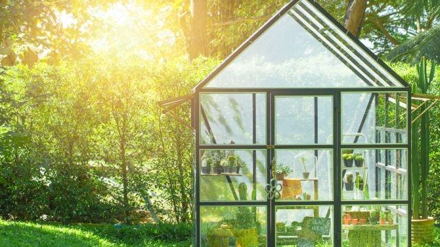 Twój własny ogród pod szkłem