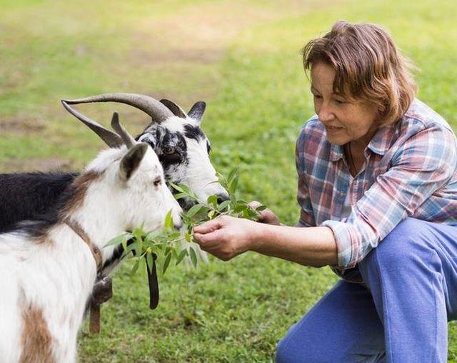 Siara kozia i jej wyjątkowe właściwości